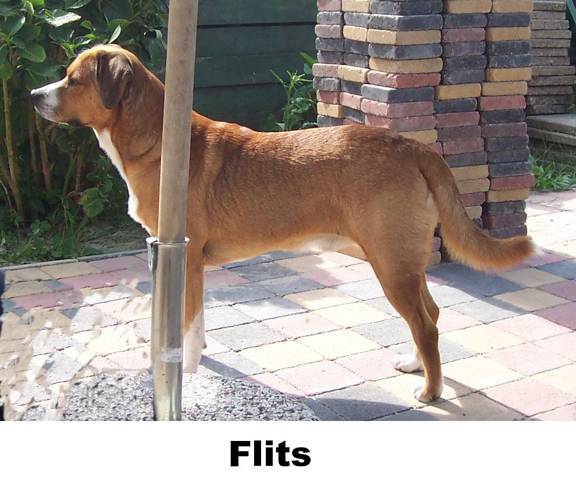 flits